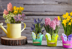 watering can, daffodil, hyacinth, muscari, crocuses, spring, bucket, flowers, nature wallpaper