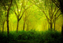 forest, green, nature, landscape, trees wallpaper