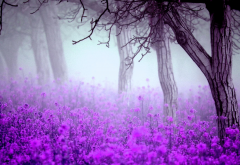 flowers, trees, mist, nature wallpaper