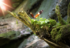 moss, snag, grass, butterfly, nature, insect wallpaper