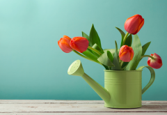 watering can, flowers, tulips wallpaper