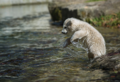 animals, bear cub, cub, water, polar bear wallpaper