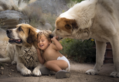 child, boy, baby, dogs, animals, laugh wallpaper