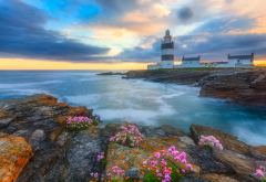 hook lighthouse, sunset, ireland, nature, landscape, sea, shore, stones, flowers, lighthouse wallpaper