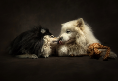 animals, dogs, couple, tenderness, affection, kiss wallpaper