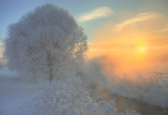 nature, snow, winter, stream, tree, fog, sun wallpaper