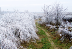 hoarfrost, path, winter, frost, nature wallpaper