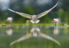 bird, water, flowers, nature, animals, reflection, owl wallpaper