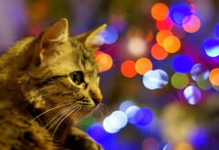 cat, animals, bokeh wallpaper