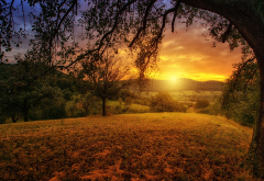 sunset, tree, branches, nature wallpaper