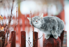 cat, animals, fence, branch wallpaper