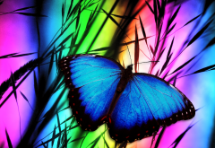 butterfly, macro, grass, colorfull, insect, animals wallpaper