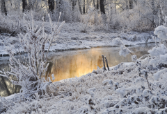 nature, winter, snow, frost, stream, bushes wallpaper