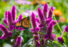 macro, flowers, inflorescence, butterfly, summer, animals wallpaper