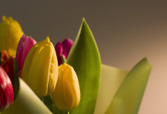 flowers, macro, bokeh, nature, tulips, holiday, march 8 wallpaper