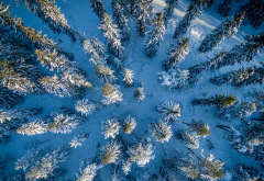 aerial view, nature, trees, winter, snow, forest, tree wallpaper