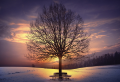 tree, sunlight, nature, winter, sky, snow, sunset wallpaper