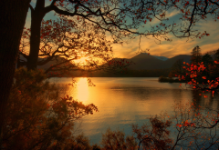 lake, sunset, nature, tree, autumn wallpaper