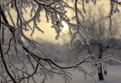 nature, winter, snow, branches, hoarfrost wallpaper