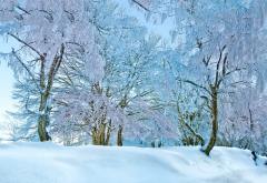 nature, winter, snow, tree, frost wallpaper