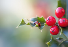nature, macro, holly, leaves, berries, ladybug wallpaper