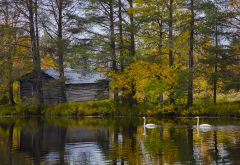 finland, nature, landscape, lake, tree, autumn, birds, swan, house wallpaper