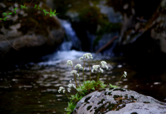 flowers, stones, spring, river, cliff, nature, waterfall wallpaper