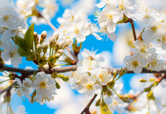 spring, tree, branches, bloom, flowers, nature wallpaper