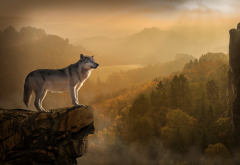 animals, predator, wolf, nature, rocks, forest, twilight wallpaper