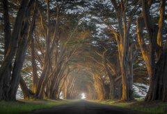 nature, landscape, cypress, trees, road, mist, sunrise, tunnel, grass wallpaper