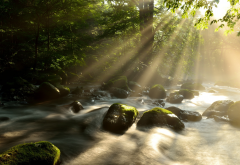 nature, summer, forest, river, stream, stones, sun rays wallpaper
