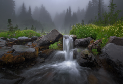 nature, forest, stream, stones, waterfall, threshold, morning, fog wallpaper