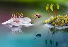 macro, nature, moss, sprouts, flower, spider, reflection, animals, insects wallpaper
