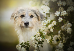 animals, dog, bush, bloom, flowers wallpaper