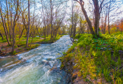 stream, nature, spring, forest wallpaper