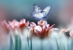 nature, macro, flowers, butterfly, insects, animals wallpaper