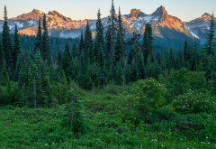tatoosh range, nature, forest, mountains, tree, mount rainier national park, washington, usa wallpaper