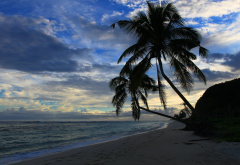 lalomanu beach, samoa, beach, island, nature, laloman, asylum, palm tree, sea, ocean,  wallpaper