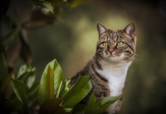 animals, cat, nature, leaves wallpaper