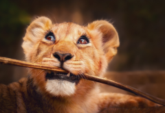 lion, cub, branch, muzzle, animals wallpaper