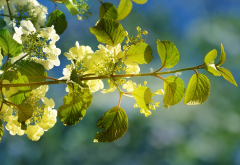 nature, spring, branch, leaves, flowers, bloom wallpaper