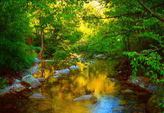 nature, forest, stream, stones wallpaper