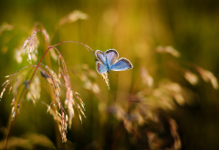 nature, blade of grass, butterfly, macro, field wallpaper