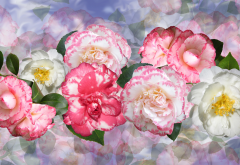flowers, graphics, camellia, nature wallpaper