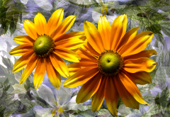 rudbeckia, graphics, flowers, petals wallpaper