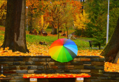 autumn, trees, umbrella, park, fall, foliage, bench, trees wallpaper