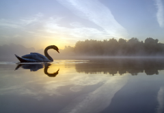 crime lake, fog, lake, reflection, bird, england, morning, swan, nature wallpaper