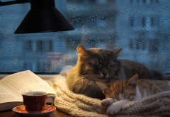 autumn, cat, glass, water drops, house, kitty, rain, animals wallpaper