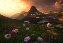 nature, mountains, landscape, grass, flowers, sunset, goat wallpaper