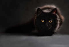 animals, cat, eyes, black cat wallpaper